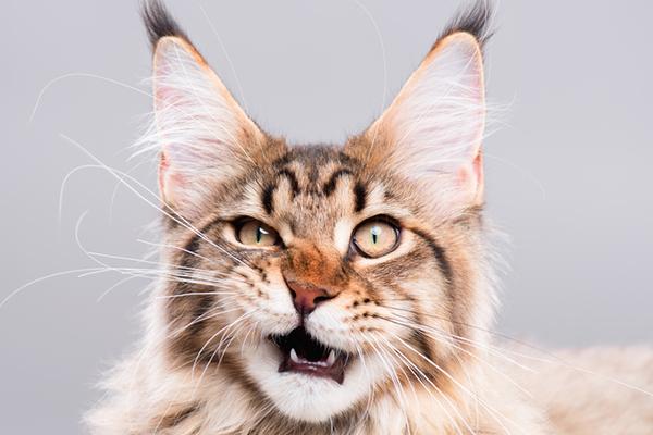 Cat Smelling My Eyes